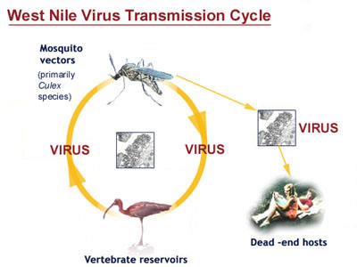 faq west nile virus wnv